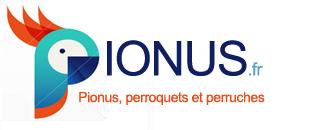 Perroquets pionus logo